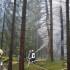 In Steinberg brennt Baum nach Gewitter