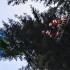 Gleitschirmflieger aus Baumkrone geborgen